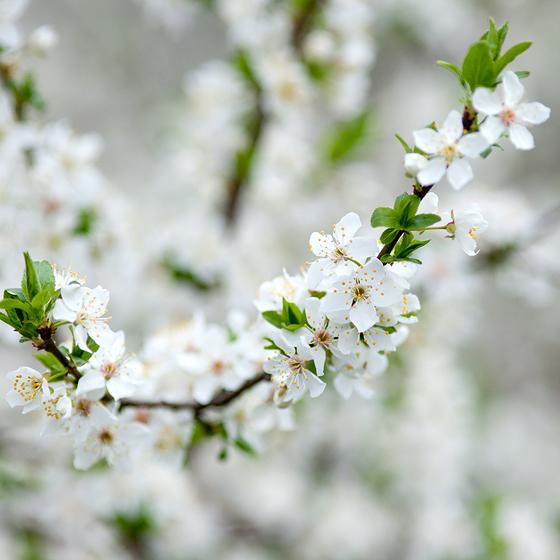 Ghirlande de flori