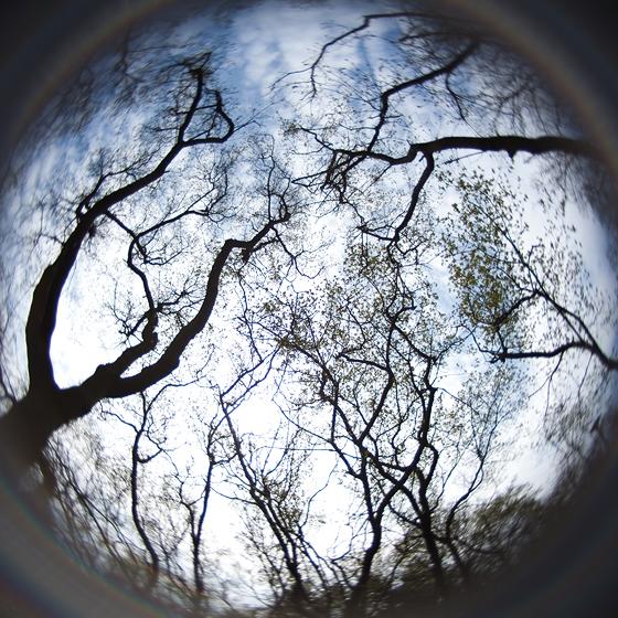 Labirint de copaci pe cerul primaverii
