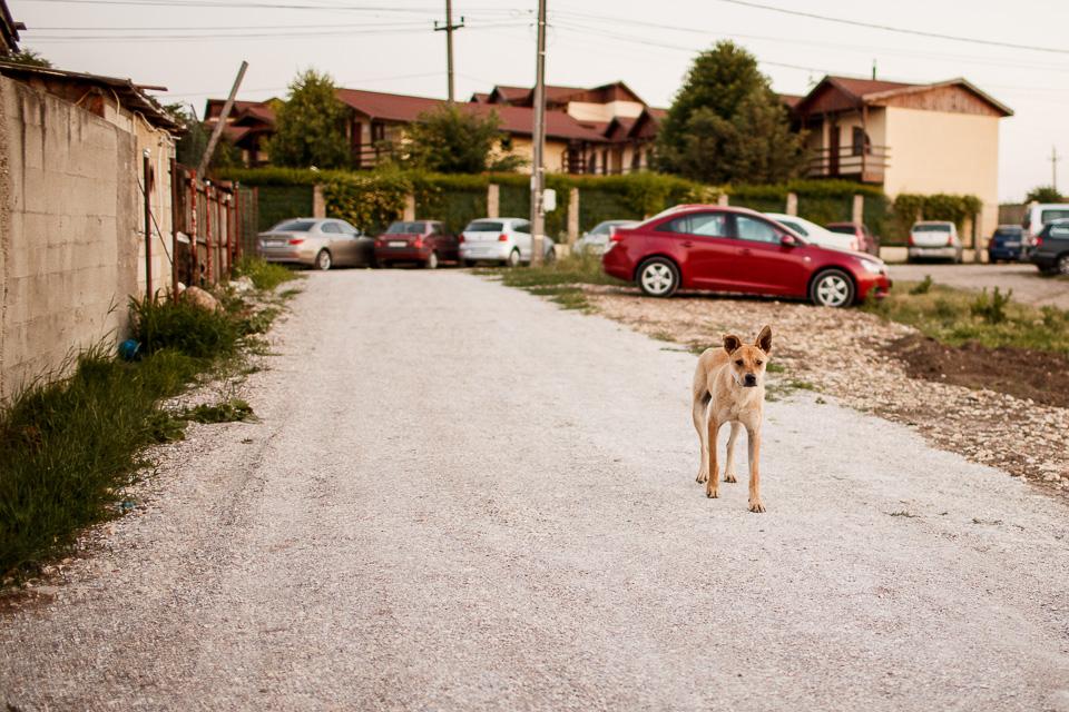 0273-Fotografie-TTD-Andreea-Ionuti-fotograf-Ciprian-Dumitrescu-DC1X2330
