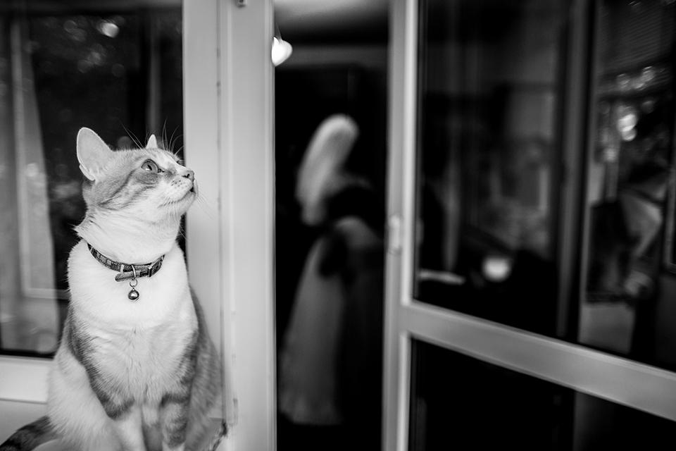 0111-Fotografie-nunta-Ruxandra-Cristi-fotograf-Ciprian-Dumitrescu-DCF_3935