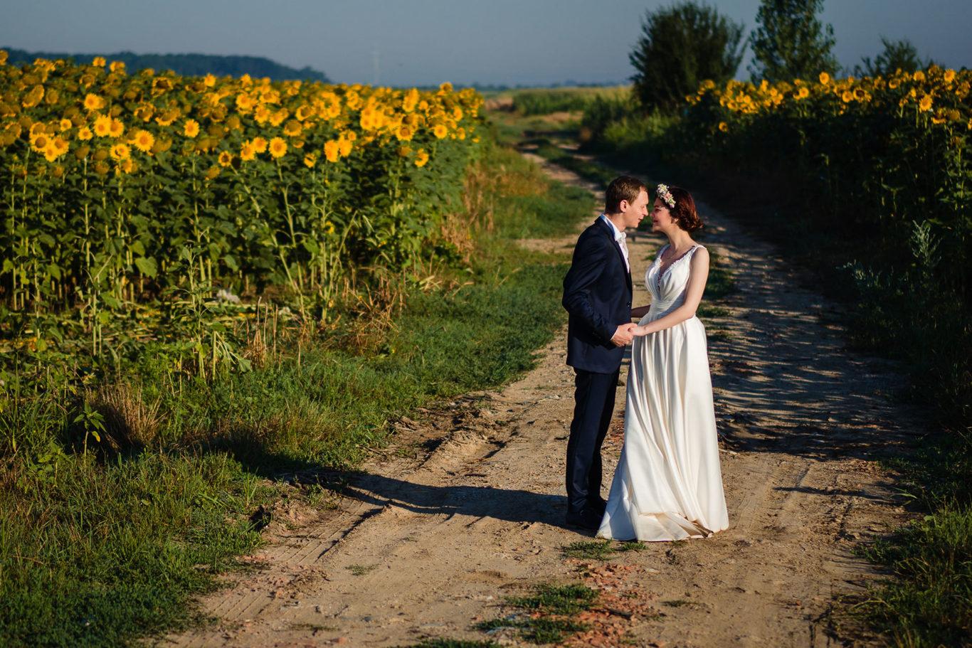 Sesiune foto in lanul de floarea soarelui
