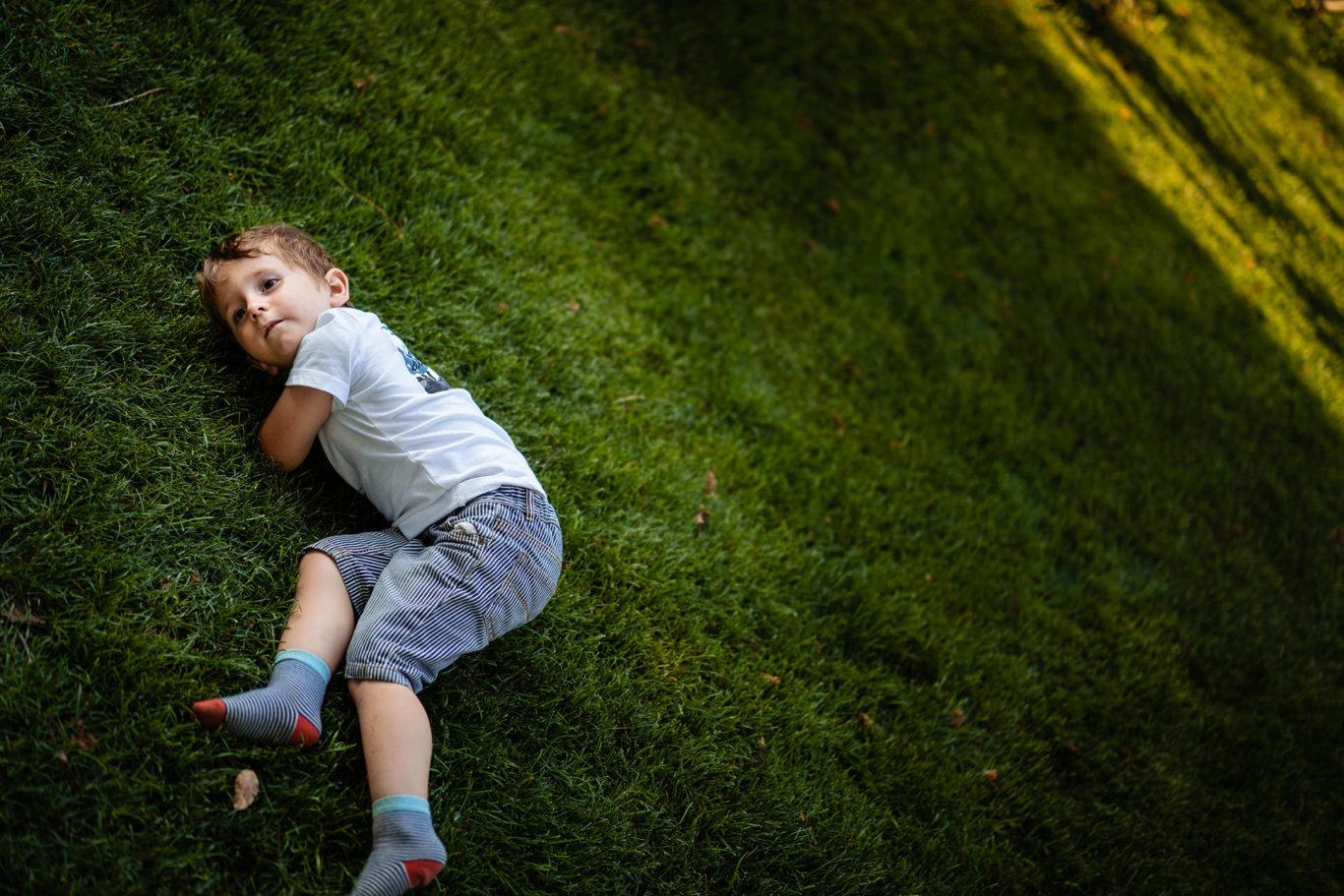 Racoare pe iarba de la Gradina cu Licurici